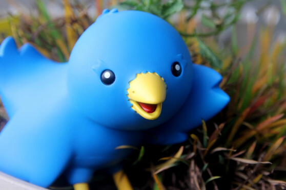 Twitter flickr bird