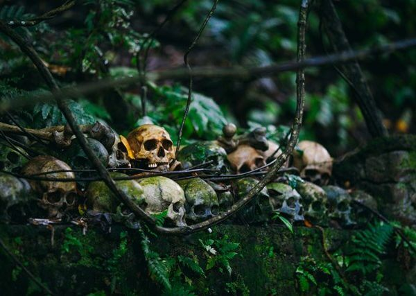 Skulls in forest