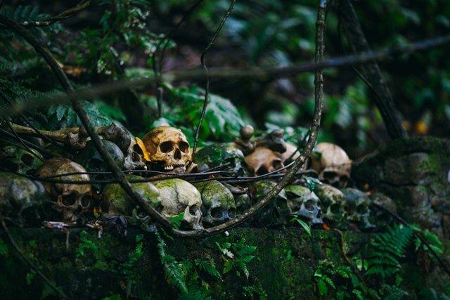 Skulls in forest